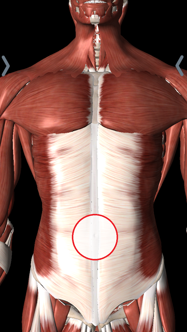 中央(へそ)の腹部