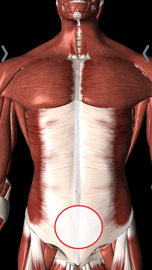 下腹部(膀胱、婦人科系の病気)