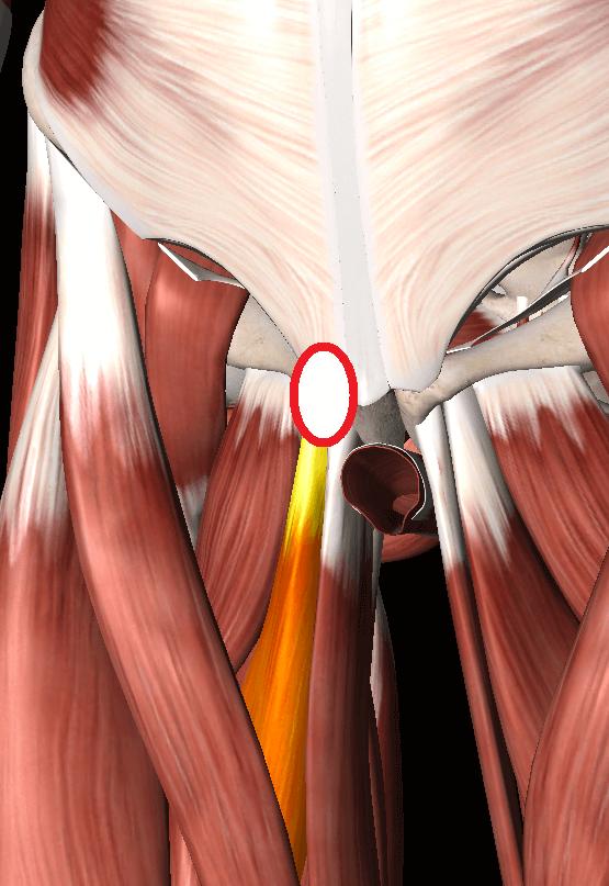 内転筋の痛み