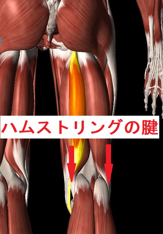 膝を伸ばすと裏側が痛い原因