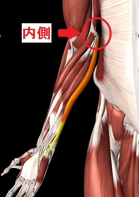 肘を伸ばすと内側が痛い場合