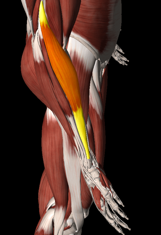 腕橈骨筋トリガーポイント