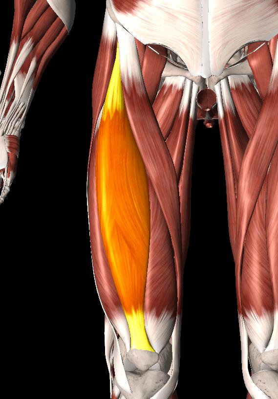 大腿直筋の痛み