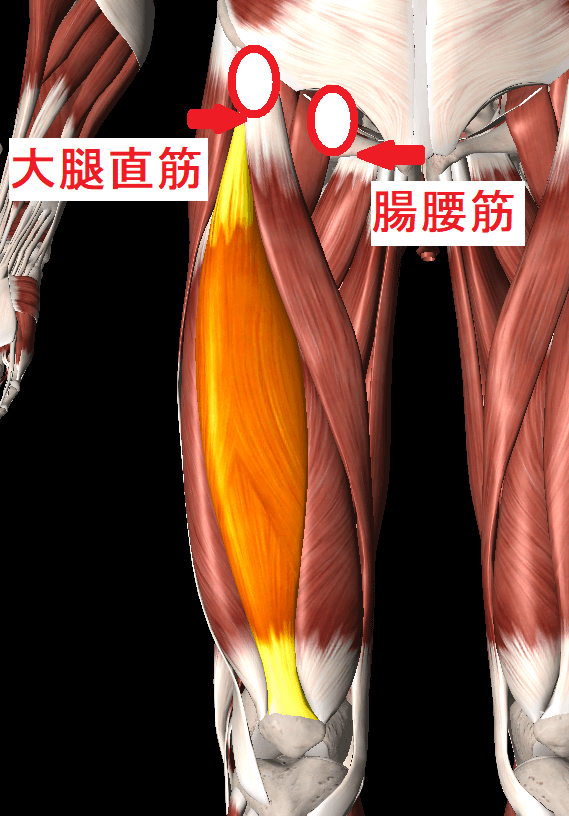 ランニングで痛みが出やすい股関節の場所
