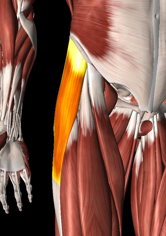 大腿筋膜張筋トリガーポイント2