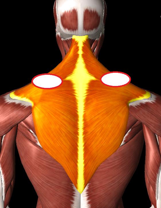 肩こりと鎖骨の関係